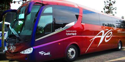 ave-autobuses