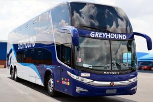 greyhound autobuses